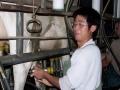 wwoofer-milking-a-cow