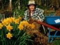 wwoofer-with-daffodills
